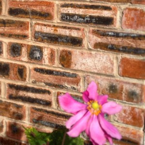 salt crystallisation on bricks